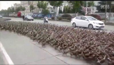 アヒル 部隊